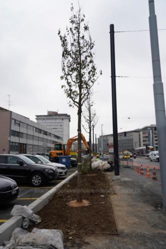 arbres024