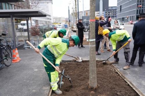 arbres018