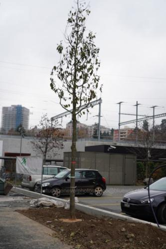 arbres023